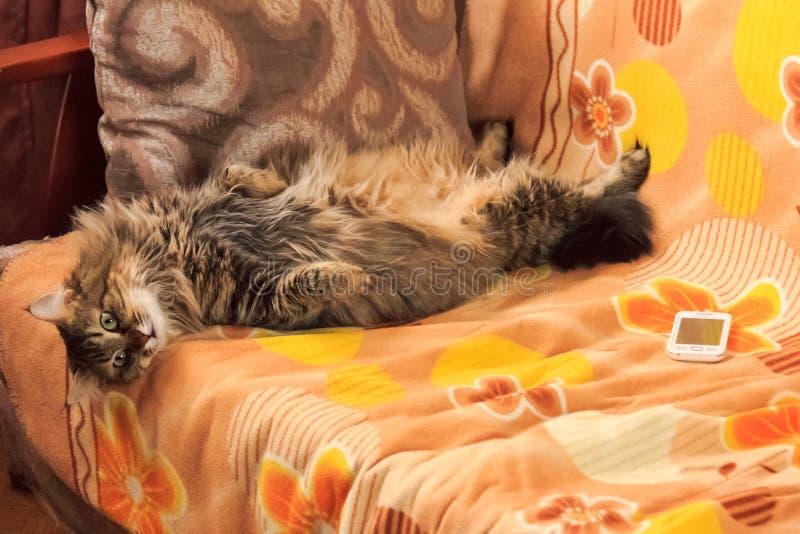 Kot jest odpoczynkowy na leżance zdjęcia stock