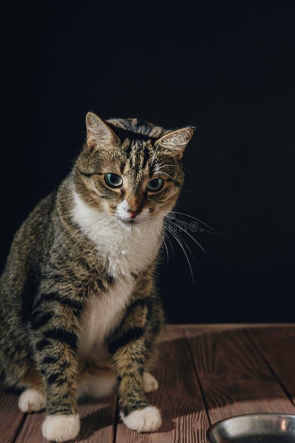 Kot jest siedzącym pobliskim pucharem z jedzeniem zdjęcie royalty free