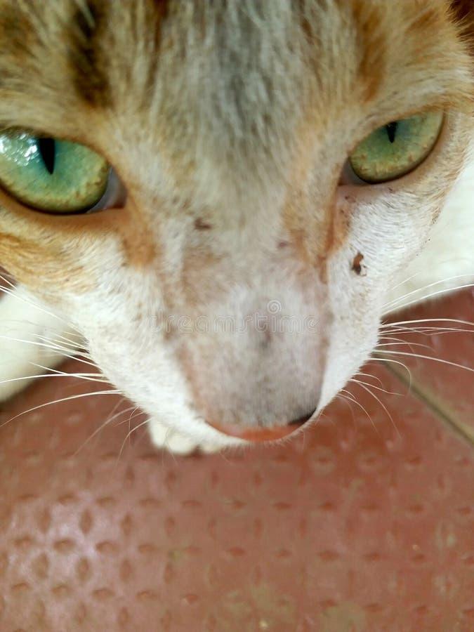 Kot jest twarzą obraz stock