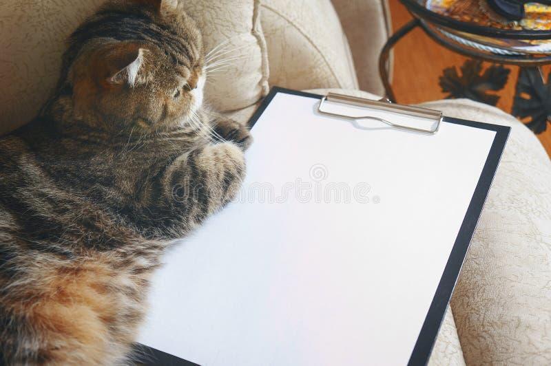 Kot kłama na Opróżniałem schowku obrazy royalty free
