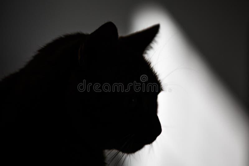 Kot kierownicza sylwetka Czarny kszta?t zwierz? domowe kaganiec Promień światło w tle obraz stock