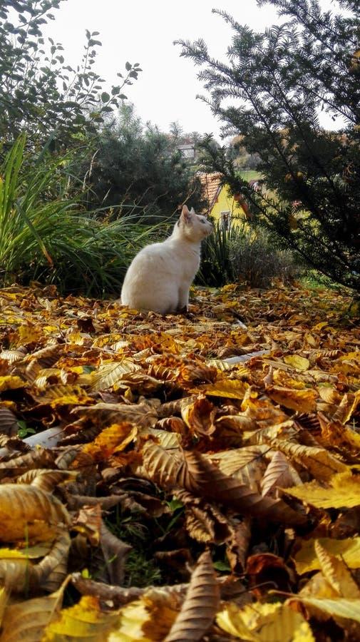 Kot królowa obraz royalty free