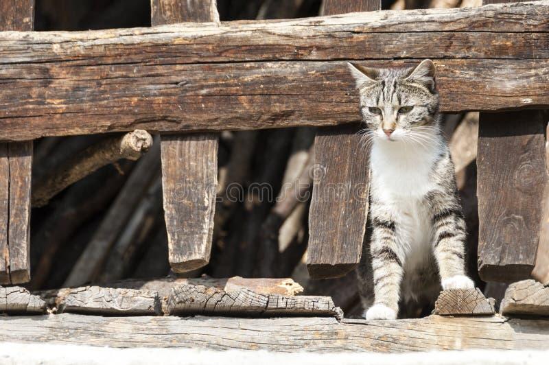 Kot między drewnianym ogrodzeniem obrazy royalty free