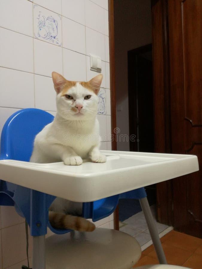 Kot myśl jest dzieckiem obraz stock