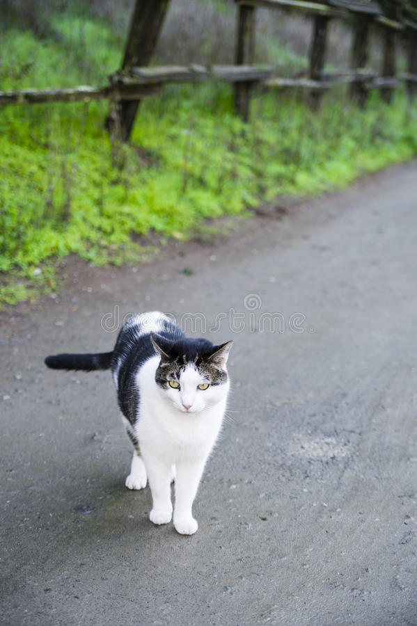 Kot na ścieżce fotografia royalty free