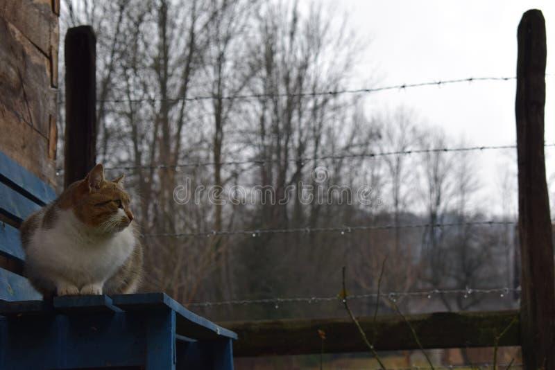 Kot na błękitnym ławki czekaniu dla zimy obraz stock