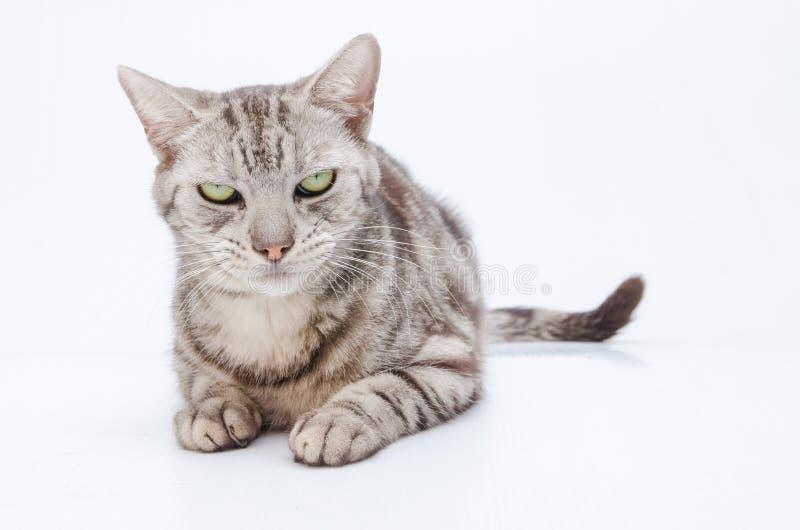 Kot na białym tle zdjęcia stock