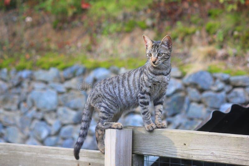 Kot na drewnianym ogrodzeniu zdjęcia stock