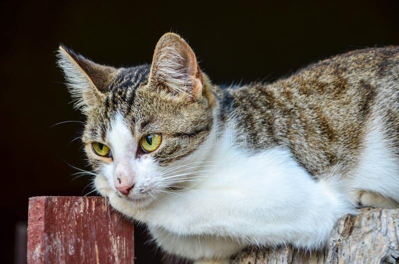 Kot na drewnianym ogrodzeniu obrazy stock