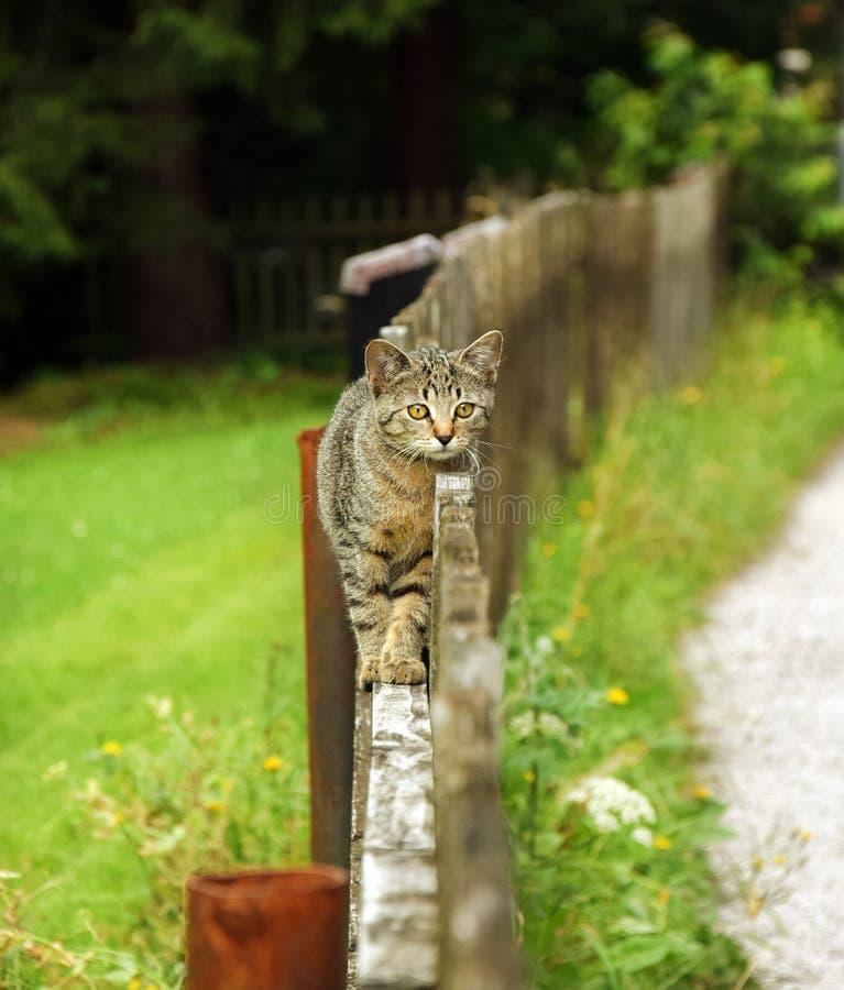 Kot na Drewnianym ogrodzeniu obraz stock