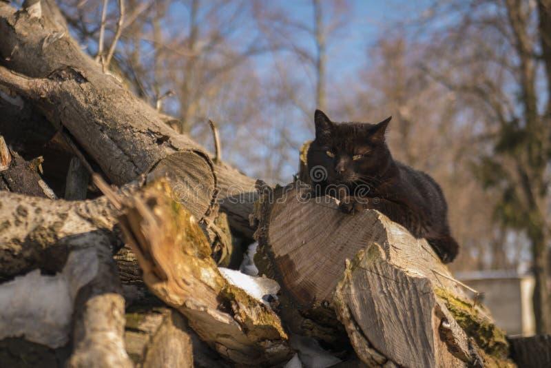 Kot na drewnie zdjęcia stock