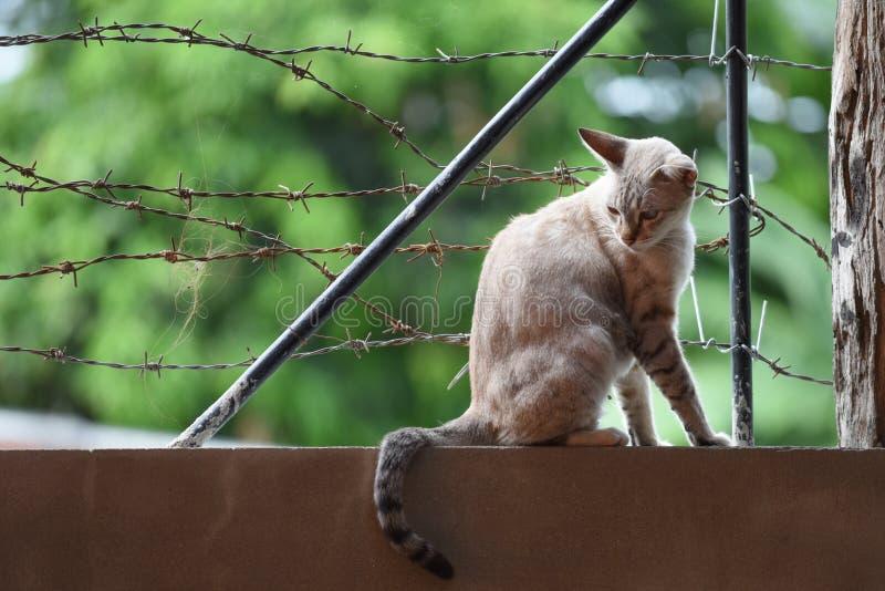 Kot na drutu kolczastego ogrodzeniu zdjęcie royalty free
