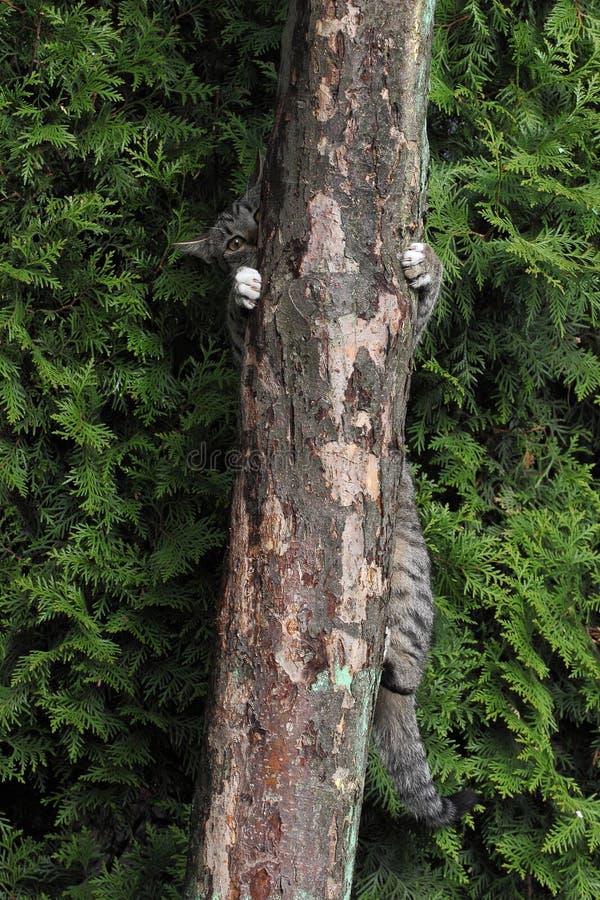 Download Kot na drzewie zdjęcie stock. Obraz złożonej z uroczy - 53783032
