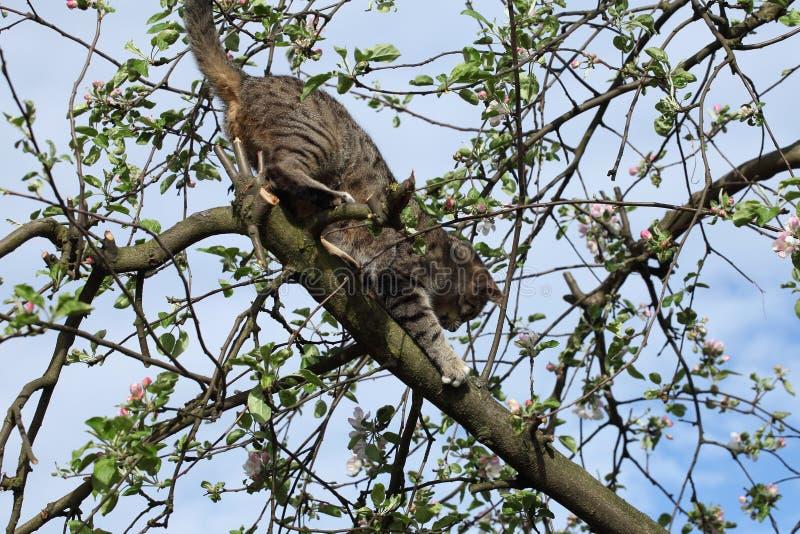 Download Kot na drzewie obraz stock. Obraz złożonej z dziecko - 53783607