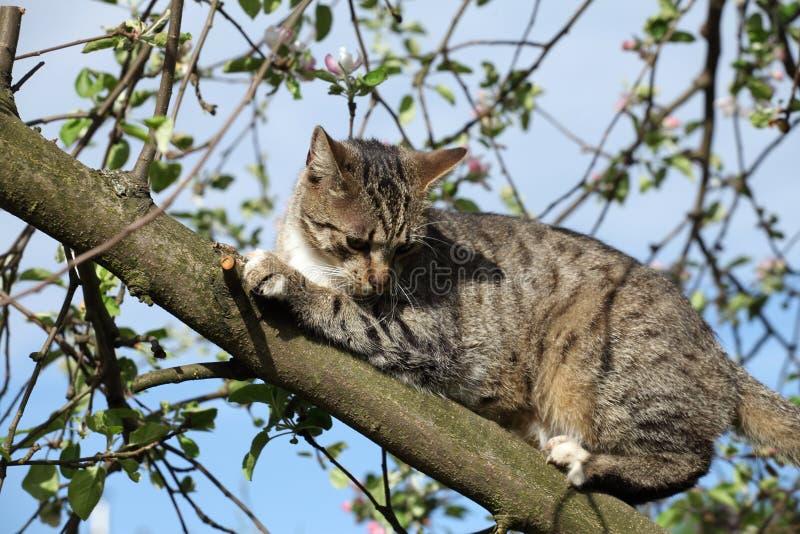 Download Kot na drzewie obraz stock. Obraz złożonej z patrzeje - 53783701
