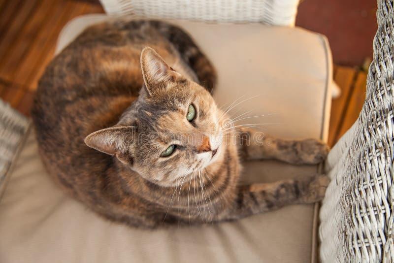 Kot na krześle Patrzeje kamerę obrazy stock