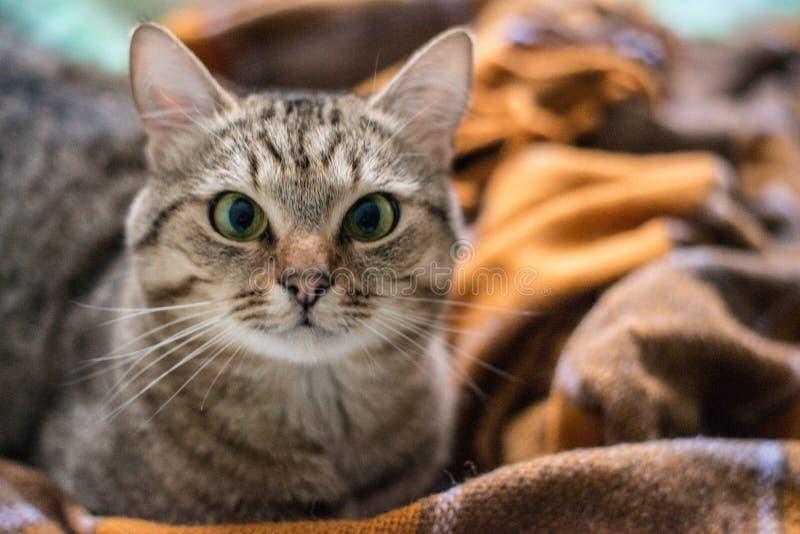 Kot na ? zdjęcie stock