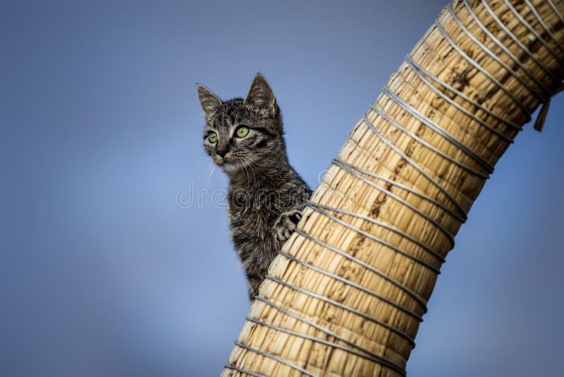 Kot na punkcie obserwacyjnym obraz stock