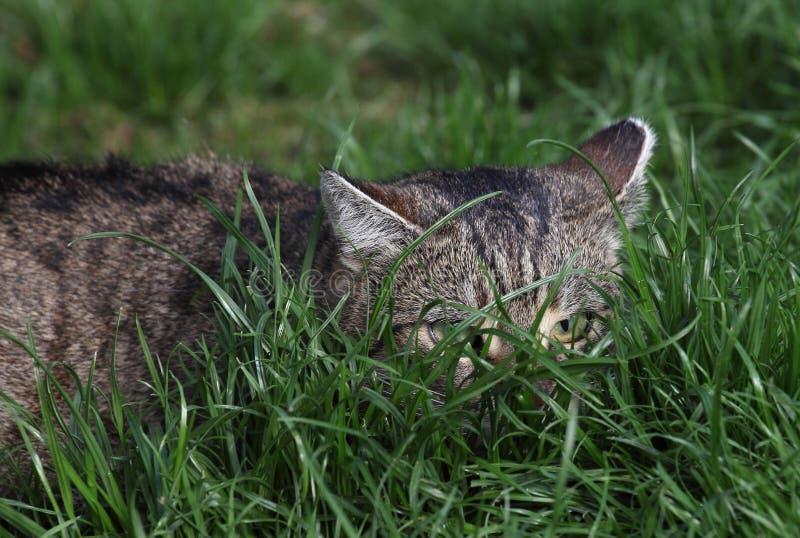 Download Kot na trawie obraz stock. Obraz złożonej z domowy, uroczy - 53783017