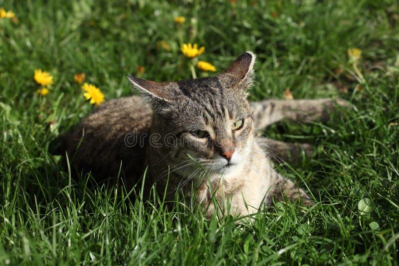 Download Kot na trawie zdjęcie stock. Obraz złożonej z kicia, uroczy - 53783766