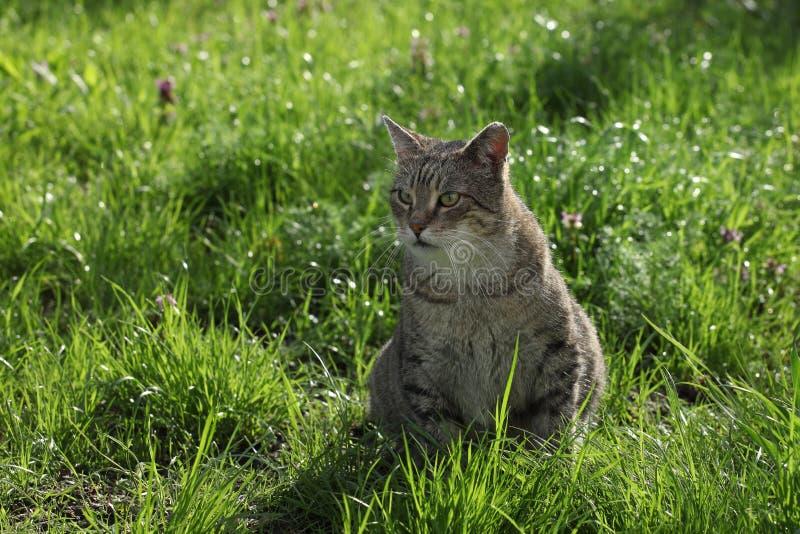 Download Kot na trawie obraz stock. Obraz złożonej z śliczny, hairball - 53783793