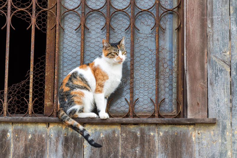 Download Kot na windowsill zdjęcie stock. Obraz złożonej z turystyka - 41952616