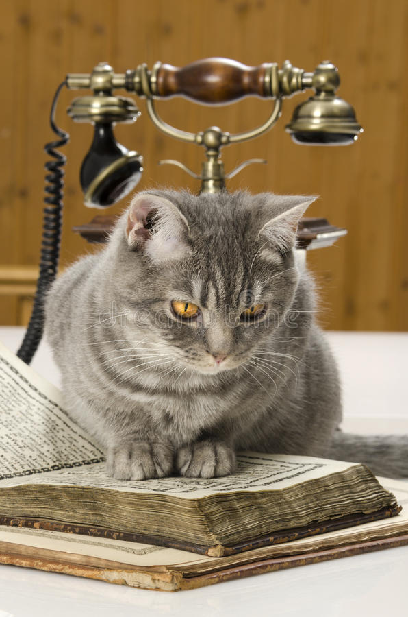 Kot naukowy z książkami na stole zdjęcia royalty free
