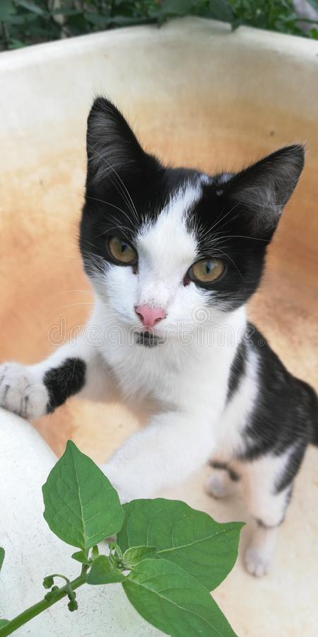 Kot niegrzeczny, zręcznie pozujący przed kamerą obraz royalty free