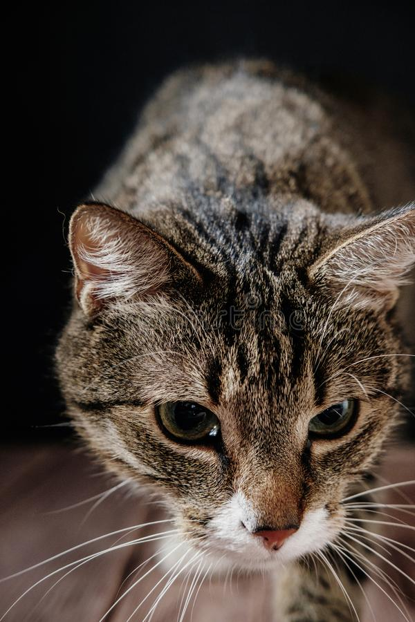 Kot obwąchuje kamerę zdjęcie stock