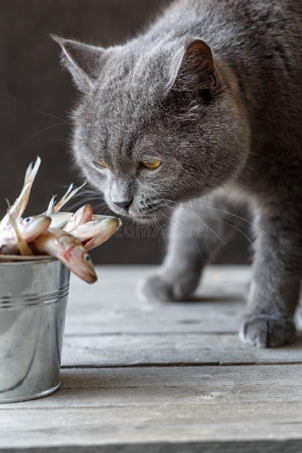 Kot obwąchuje surowej ryba zdjęcie stock