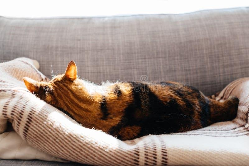 Kot odpoczywa na leżanka sen fotografia royalty free