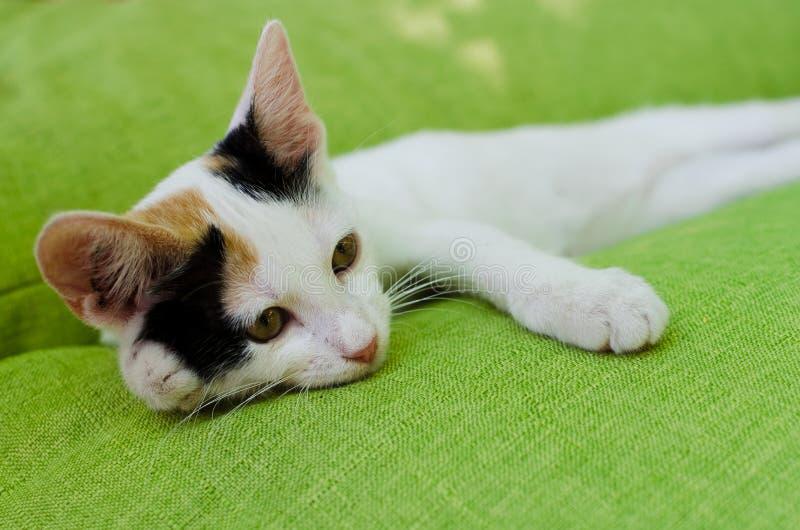 Kot odpoczywa na zielonej leżance obraz stock