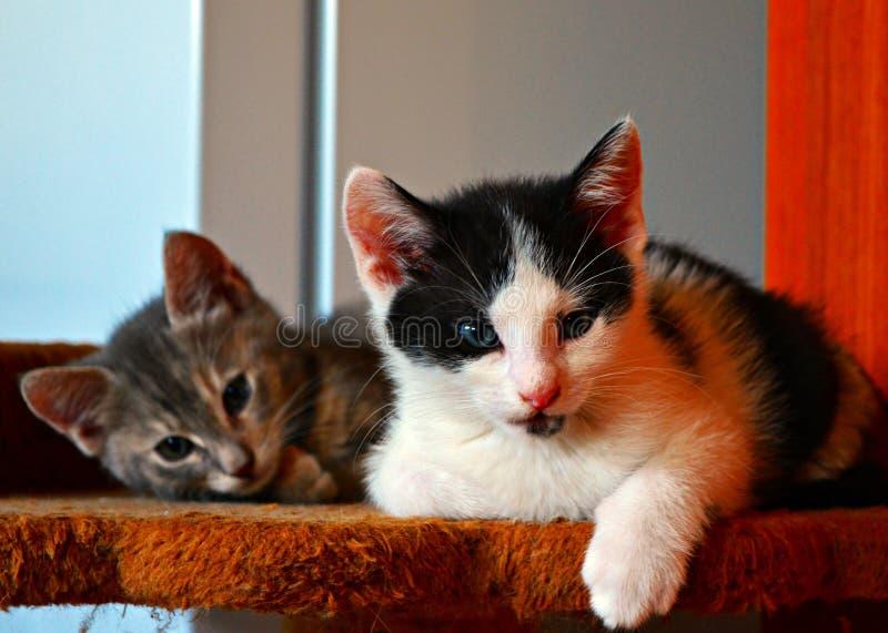 kot odprężona obraz stock