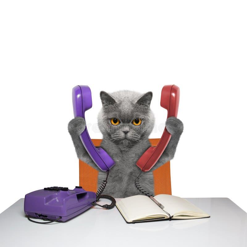 Kot opowiada nad dwa telefonami zdjęcia stock