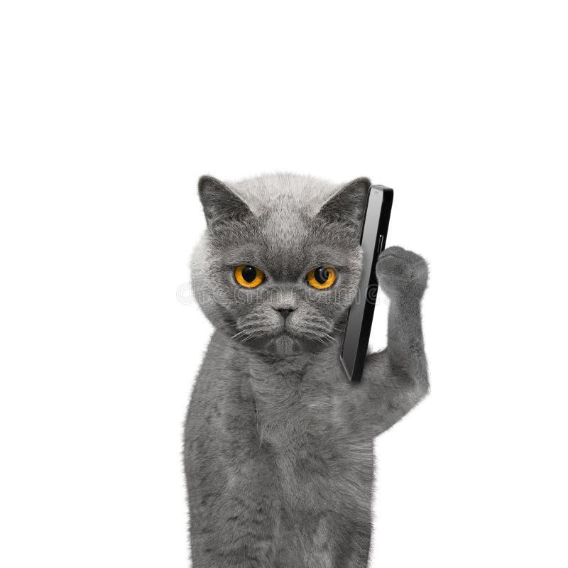 Kot opowiada nad telefonem komórkowym zdjęcia royalty free