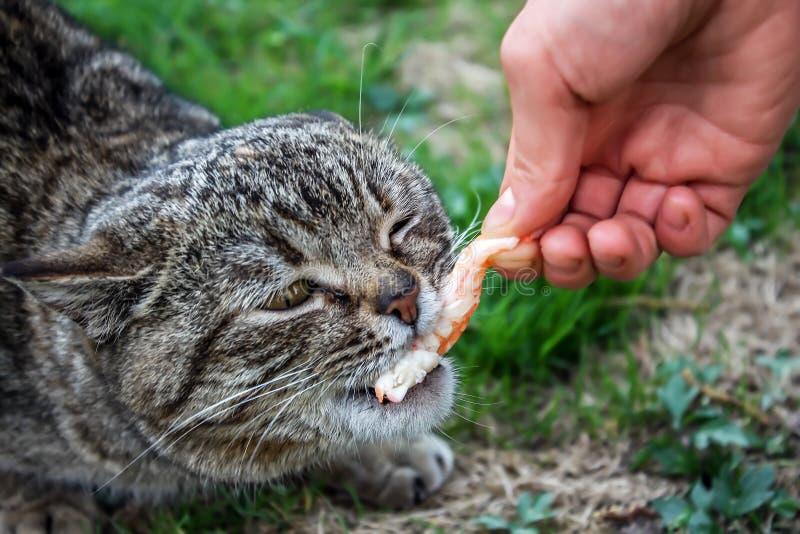 Kot patrzeje głodny zdjęcie stock