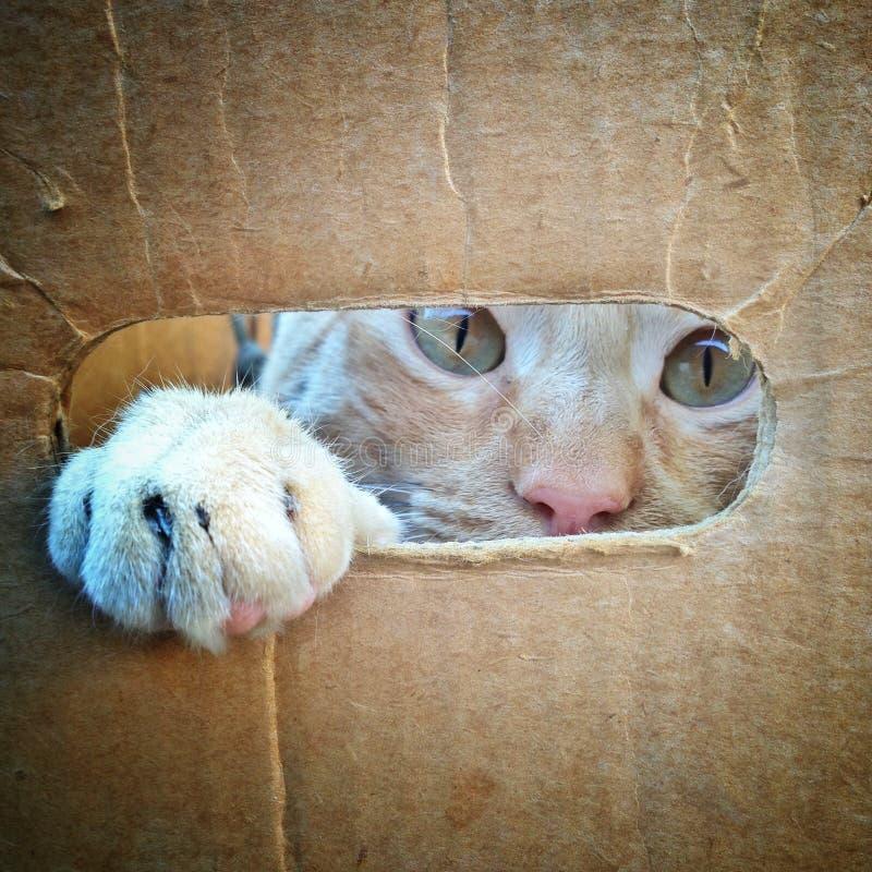 Kot patrzeje przez dziury w kartonie zdjęcia royalty free