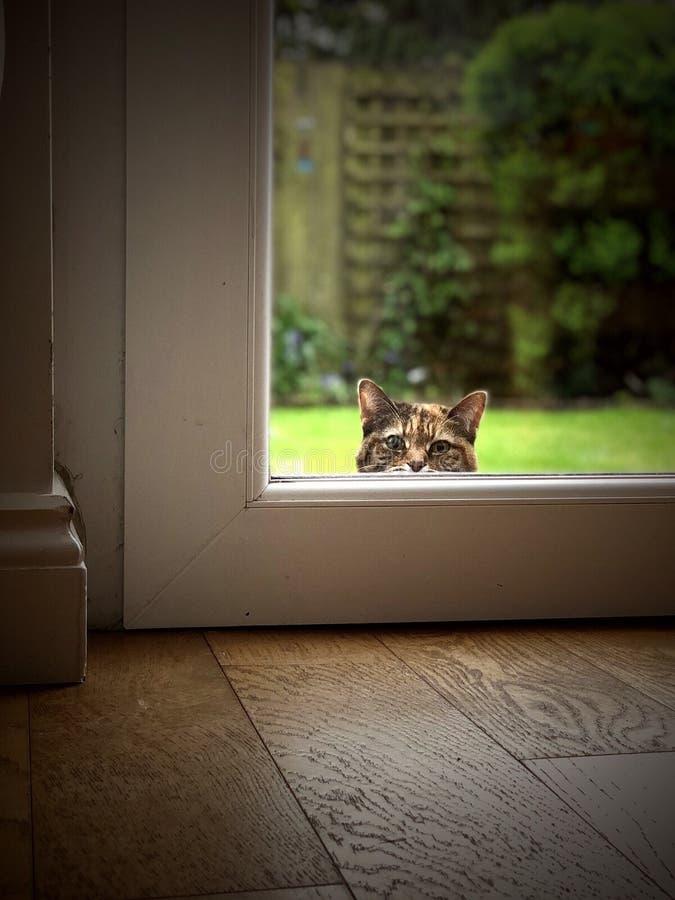 Kot patrzeje przez okno zdjęcia royalty free