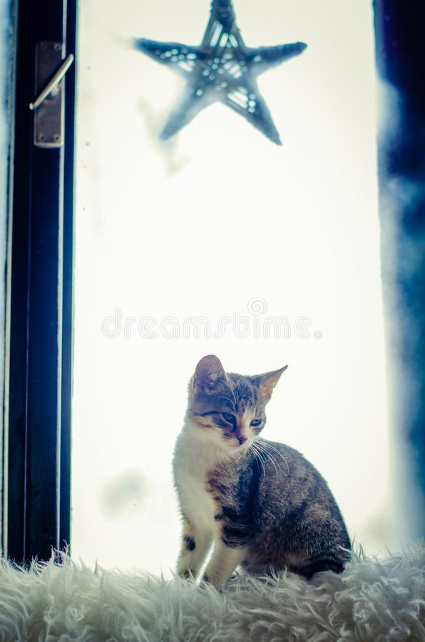 Kot patrzeje przez okno obrazy stock