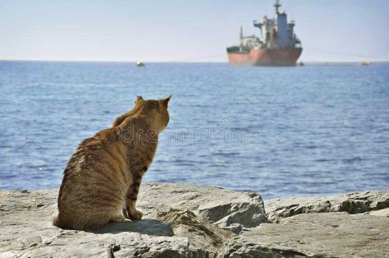 Kot patrzeje statek obrazy royalty free