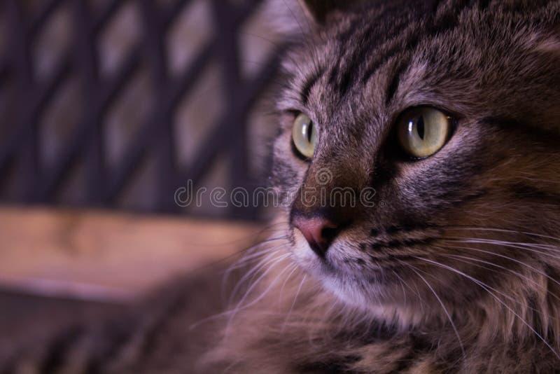 Kot patrzeje stronę obrazy royalty free