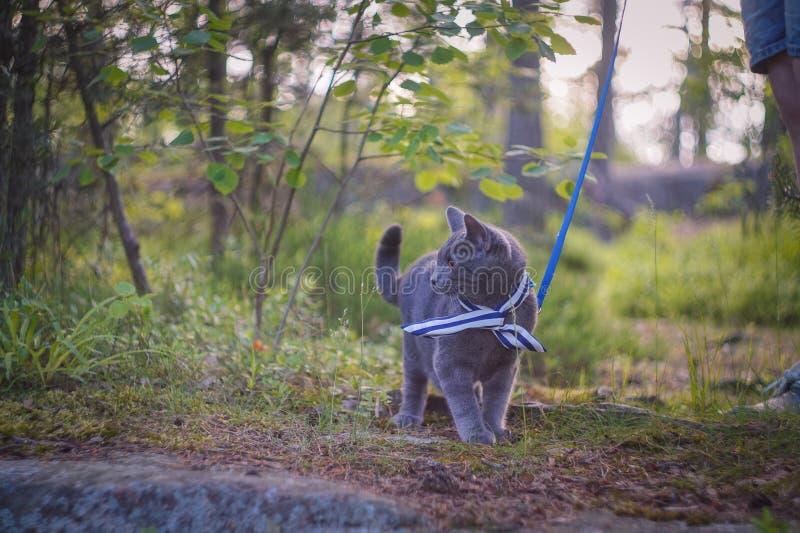 Kot patrzeje widzieć zdjęcie royalty free