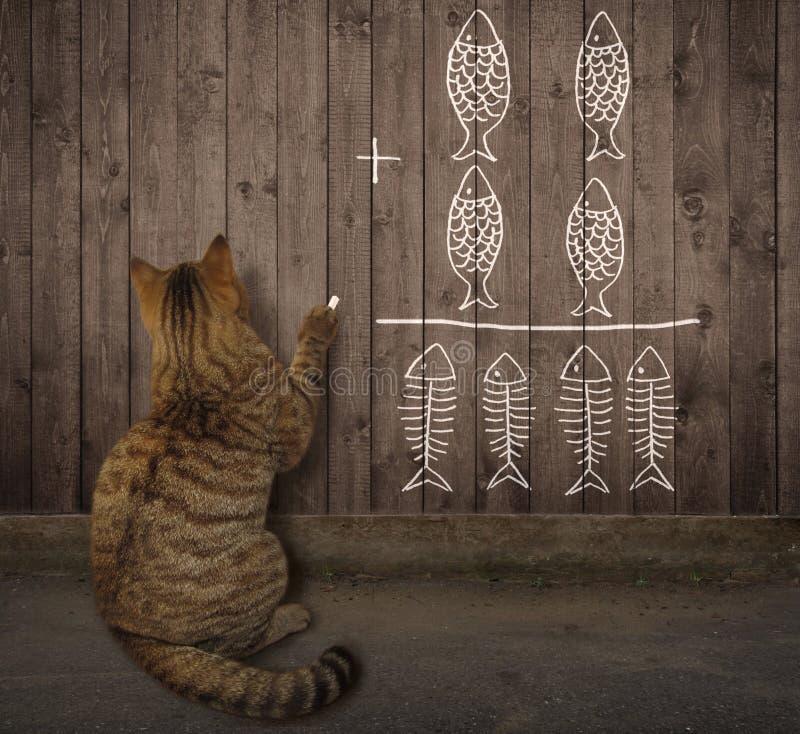 Kot pisze matematyki równaniu na ogrodzeniu 2 zdjęcia royalty free