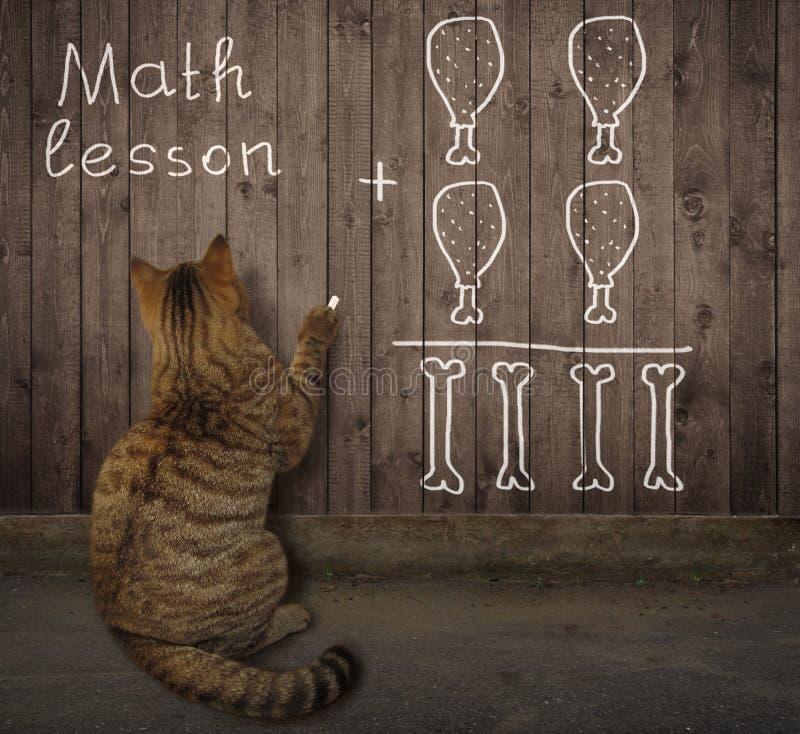 Kot pisze matematyki równaniu na ogrodzeniu fotografia stock