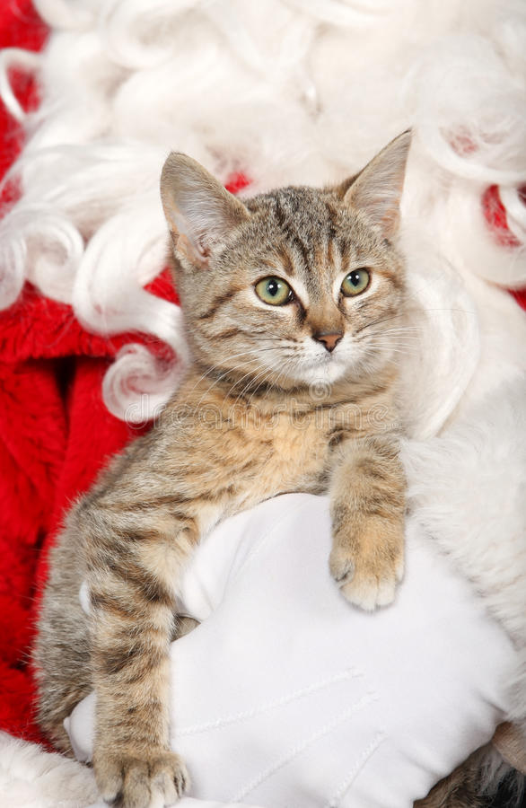 Kot podczas bożych narodzeń obraz royalty free