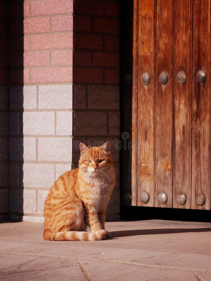 Kot pomarańczowy zdjęcie royalty free