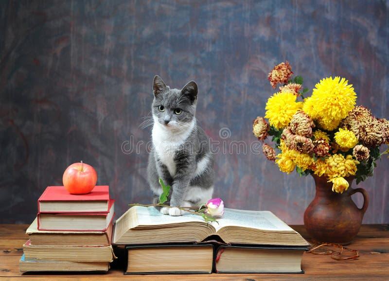 Kot pozuje obok kwiatów obraz stock