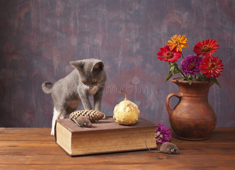 Kot pozuje obok kwiatów w wazie zdjęcie royalty free
