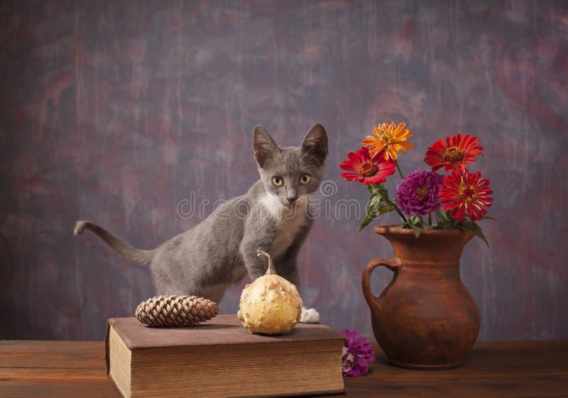 Kot pozuje obok kwiatów w wazie obraz royalty free