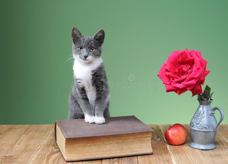 Kot pozuje obok kwiatów w wazie, książkach i jabłku, zdjęcie stock